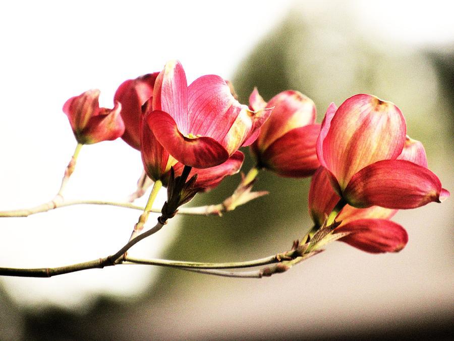 Bloom Photograph - Bloom by Stephanie Schneider