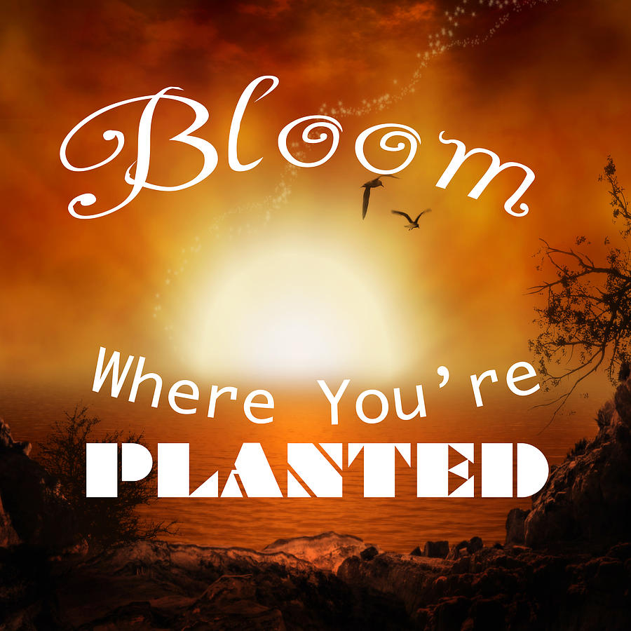 Bloom Where You Are Planted Photograph - Bloom Where You Are Planted 5007.02 by M K Miller
