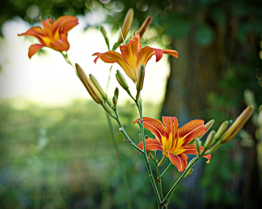 Flowers Photograph - Bloom Where Youre Planted by Cricket Hackmann