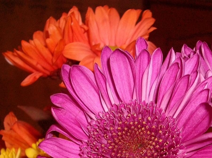 Flowers Photograph - Blooming Colors by LDPhotography Stephanie Armstrong