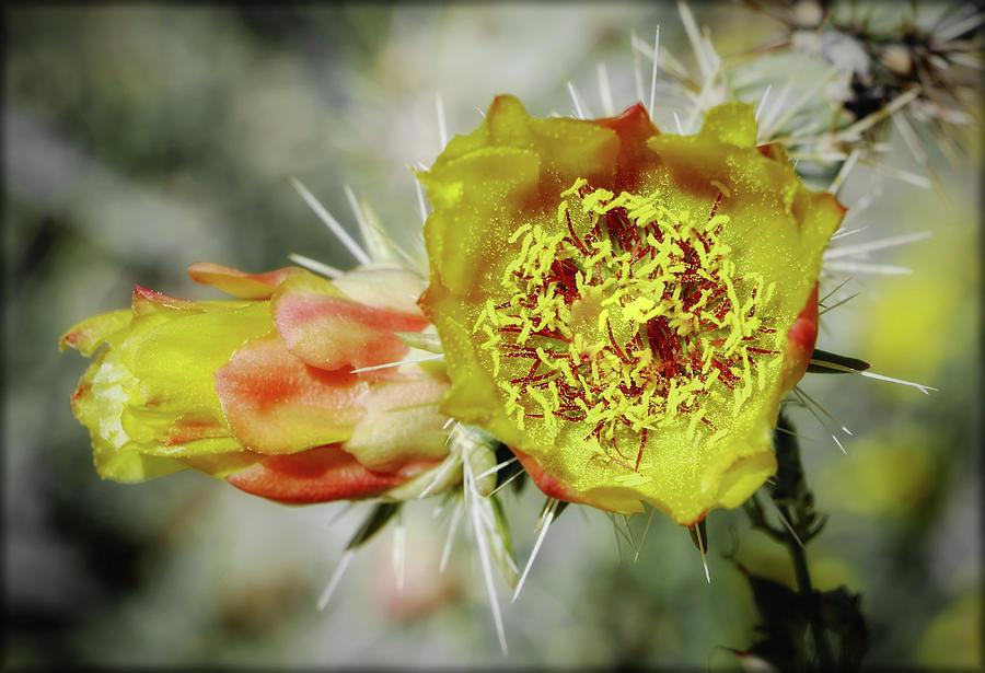 Blooming Deserts by ELAINE MALOTT