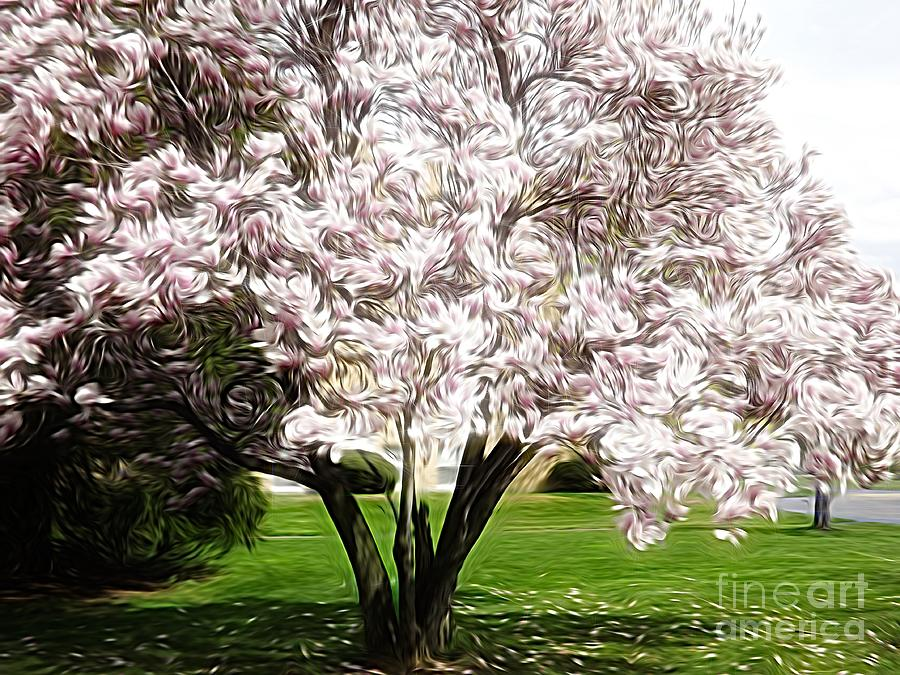 Blooming Magnolia Tree Energy Flow Abstract Photograph By Rose