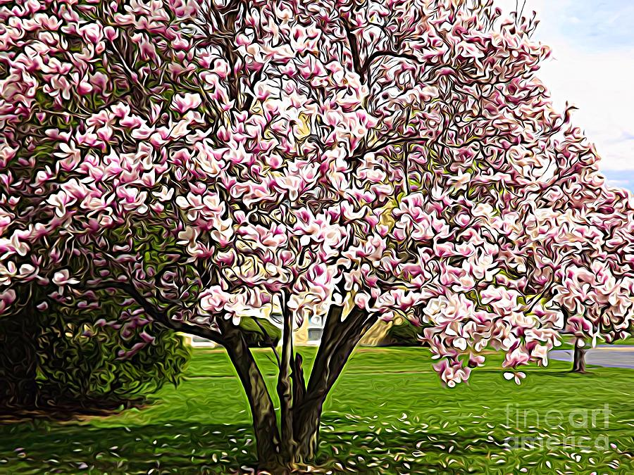 Blooming Magnolia Tree Expressionistic Abstract Photograph By Rose