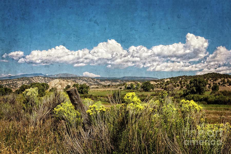 Blooming Prairie by Franz Zarda