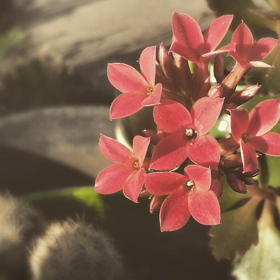 Blooming Pretty Little Flowers Photograph By Cassie Peters