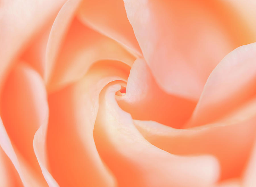 Rose Photograph - Blooming Pretty by Roy McPeak