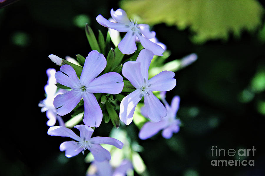 Blooms Of Summer Photograph