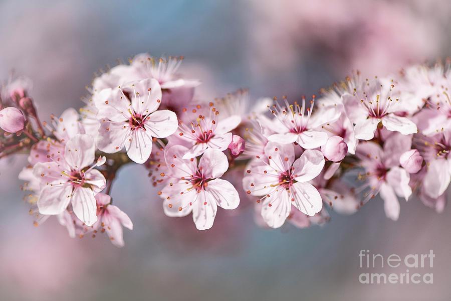 Blossom 2017 by Alex Hiemstra