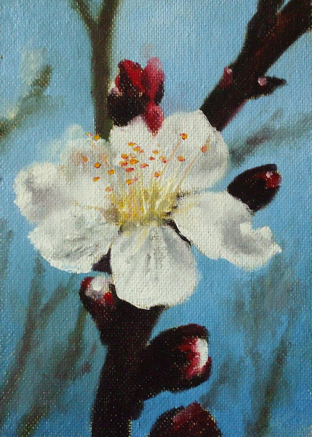 Flower Painting - Blossom by Bar Valentin