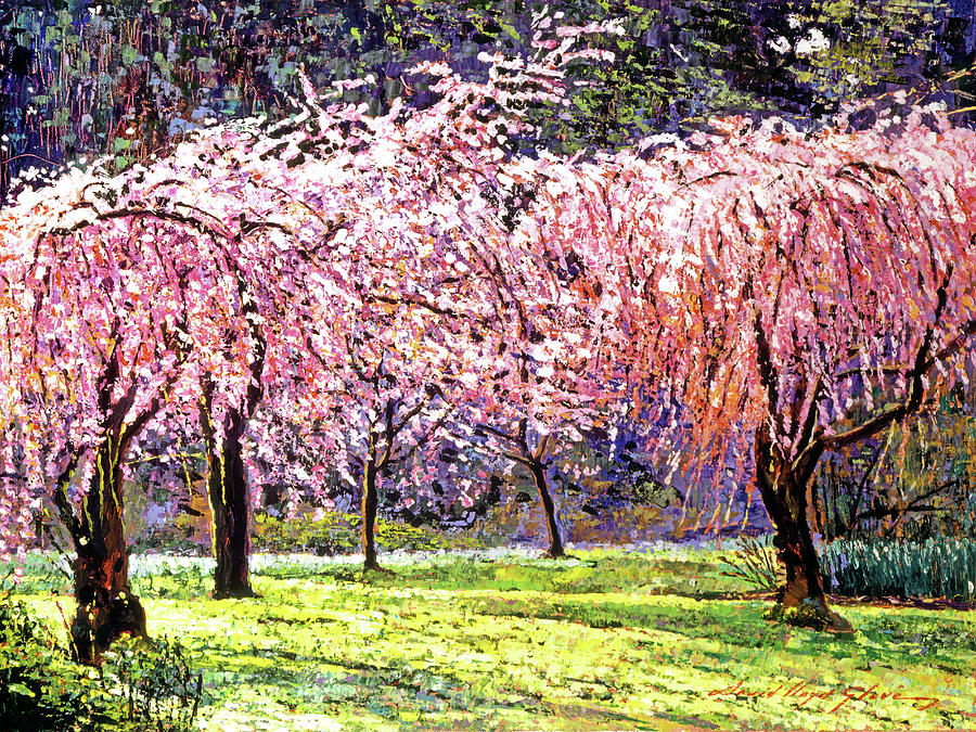 Cherry Blossoms Painting - Blossom Fantasy by David Lloyd Glover