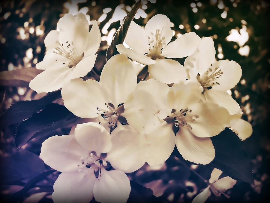 Blossom Photograph - Blossom by JAMART Photography