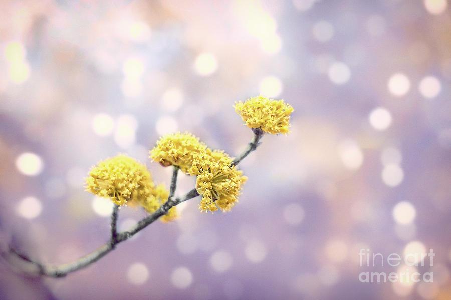 Kremsdorf Photograph - Blossom Melodies by Evelina Kremsdorf