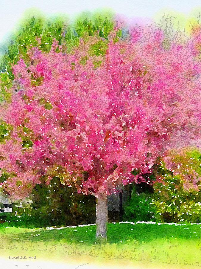 Flowering Crabapple Tree Digital Art - Blossoming Crabapple Tree by Donald S Hall