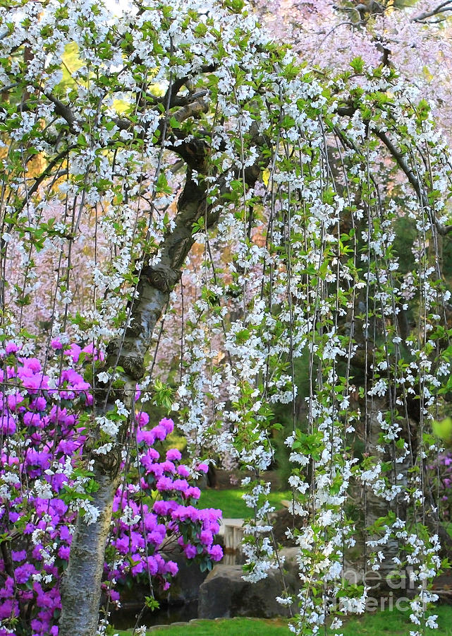 Blossoms Photograph - Blossoms Galore by Carol Groenen