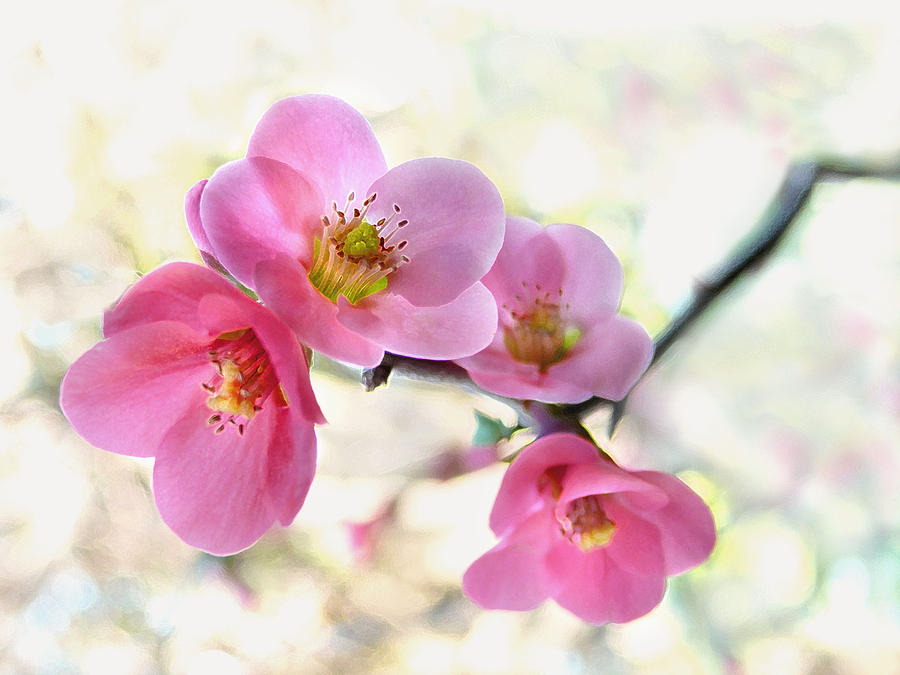 Blossoms Photograph - Blossoms by Marion Cullen