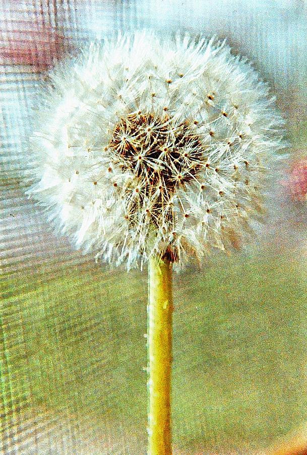 Dandelion Digital Art - Blowing In The Wind by Robert Grubbs
