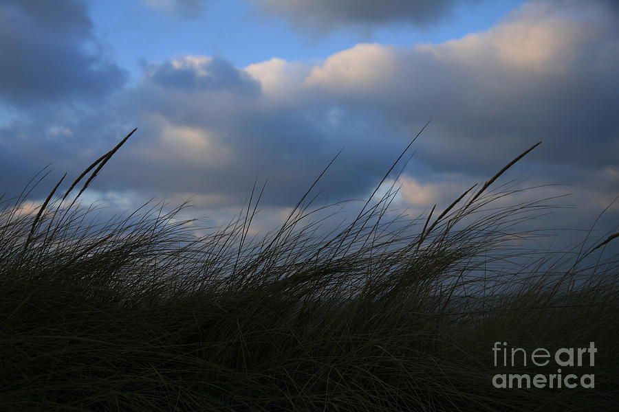 Dunes Photograph - Blowing In The Wind by Timothy Johnson
