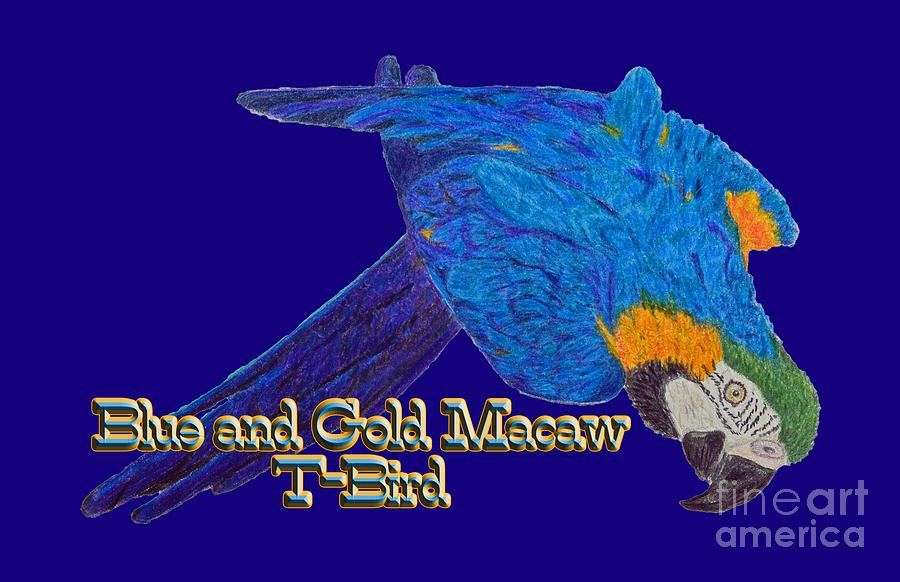 Blue And Gold Macaw Drawing - Blue And Gold Macaw by Zazus House Parrot Sanctuary