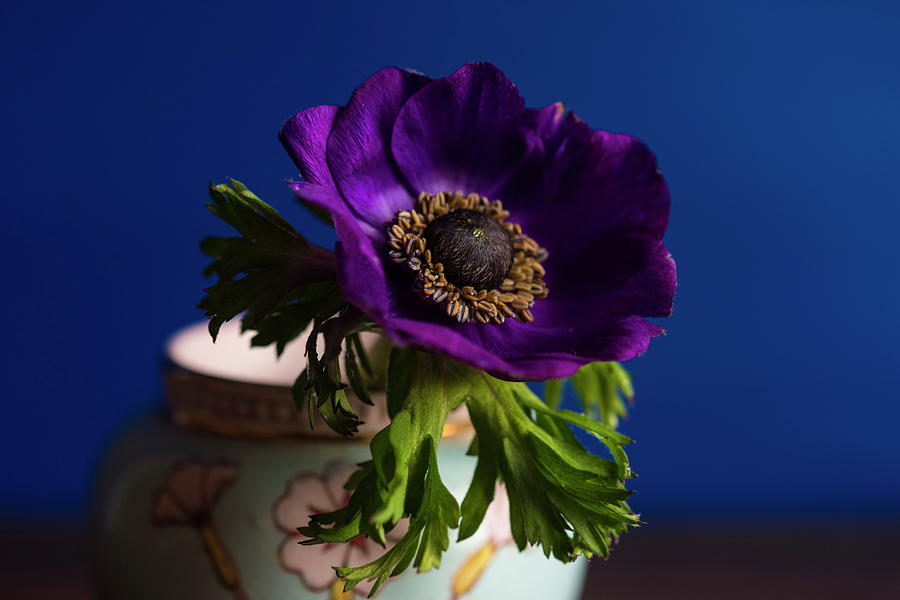 Blue And Purple Photograph