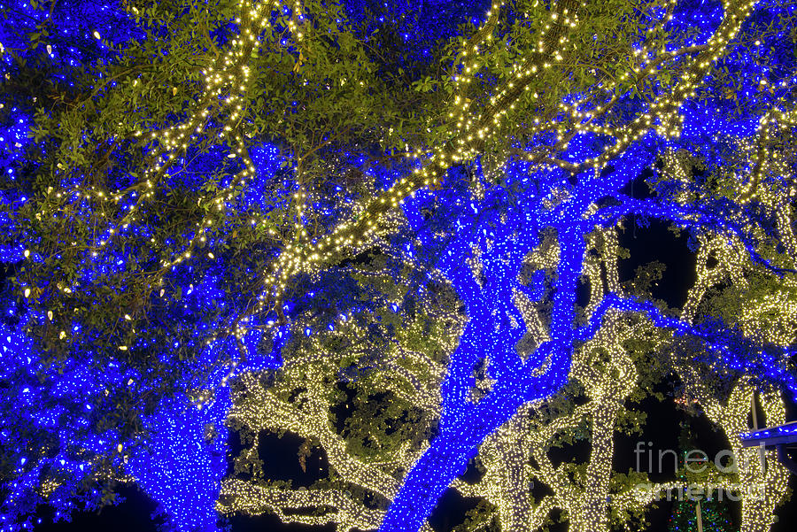 johnson city photograph blue and white christmas lights by bob phillips