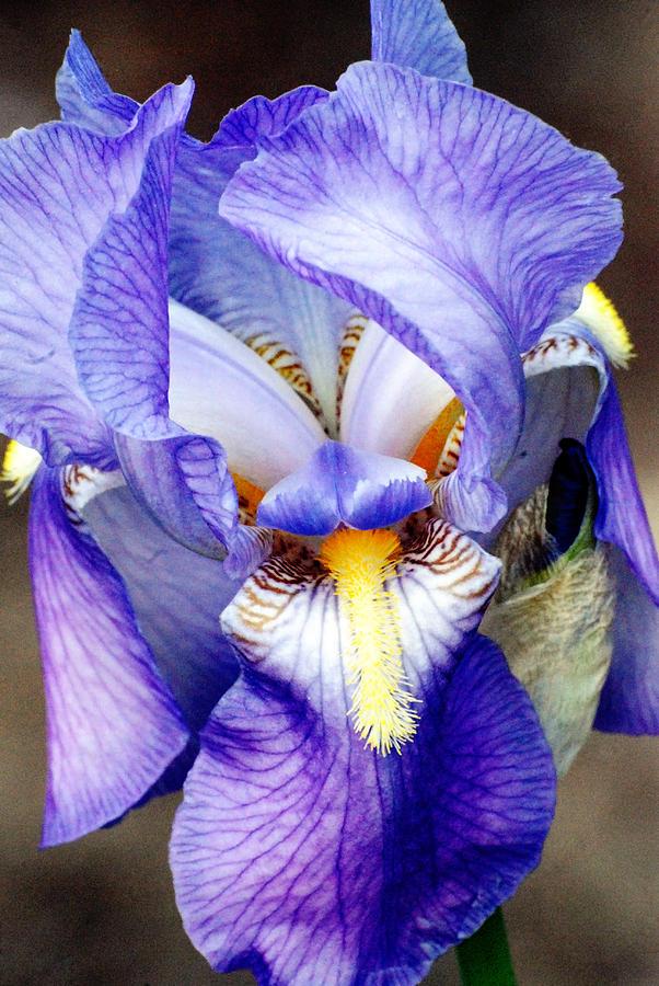 Iris chacon naked