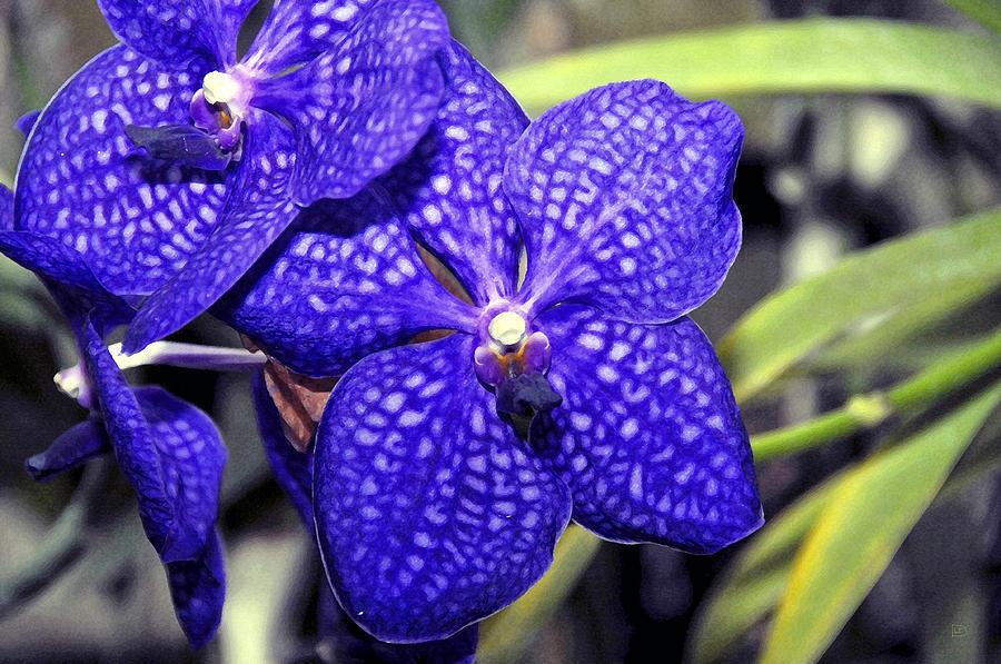 Flowers Painting - Blue Beauties by David Lee Thompson