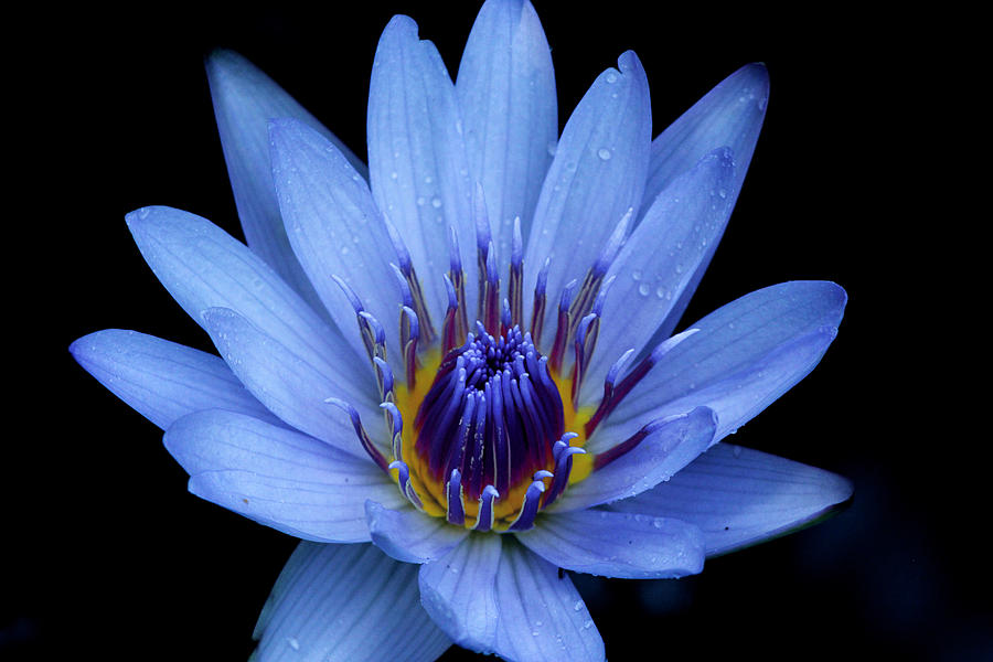 Blue Photograph - Blue Beauty by April Wietrecki Green