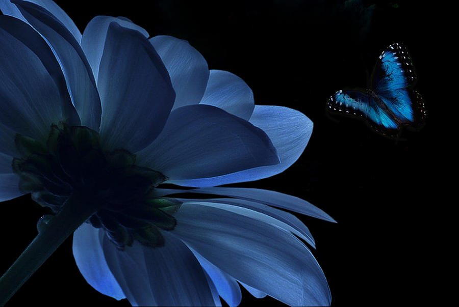 Flower Digital Art - Blue Beauty by Marrissia Ruth