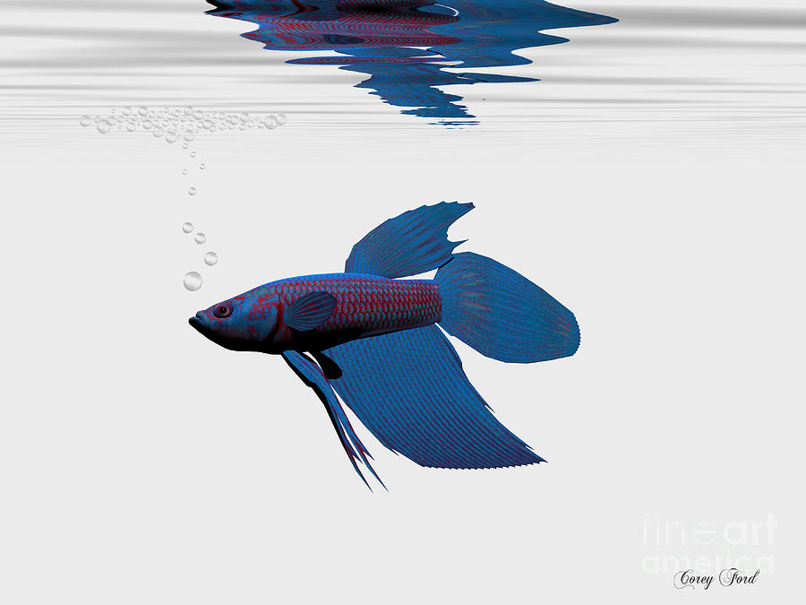 Siamese Fighting Fish Painting - Blue Betta by Corey Ford