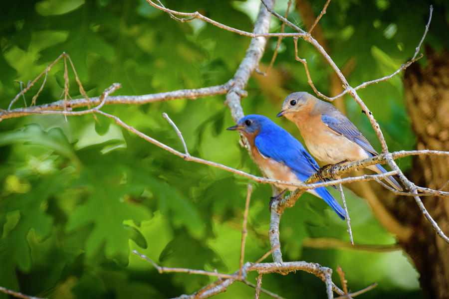 Blue Bird Couple by Oscar Gutierrez