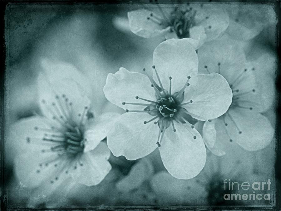 Blue Blossoms by Patricia Strand