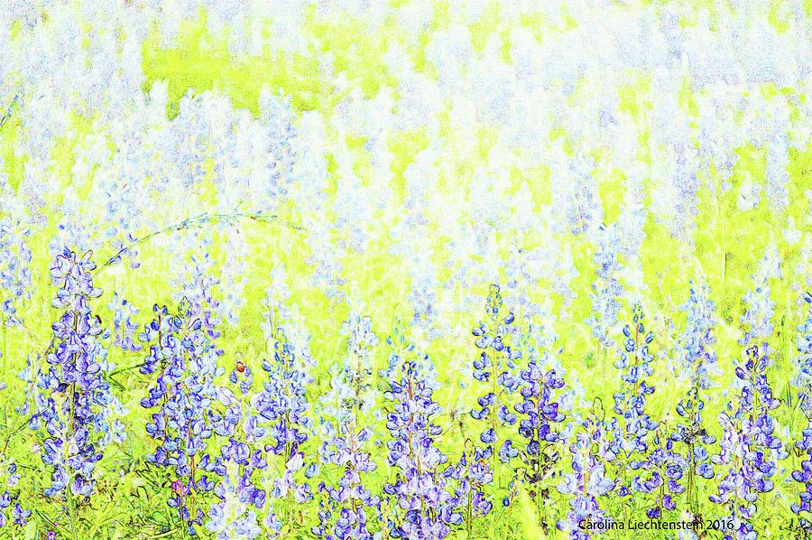 Blue Bonnet Impressions II Photograph