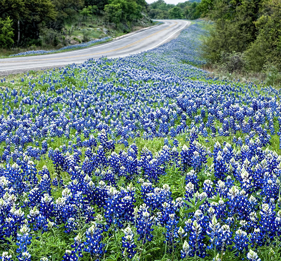 Blue Bonnets Along Texas Highway by Brian Kinney