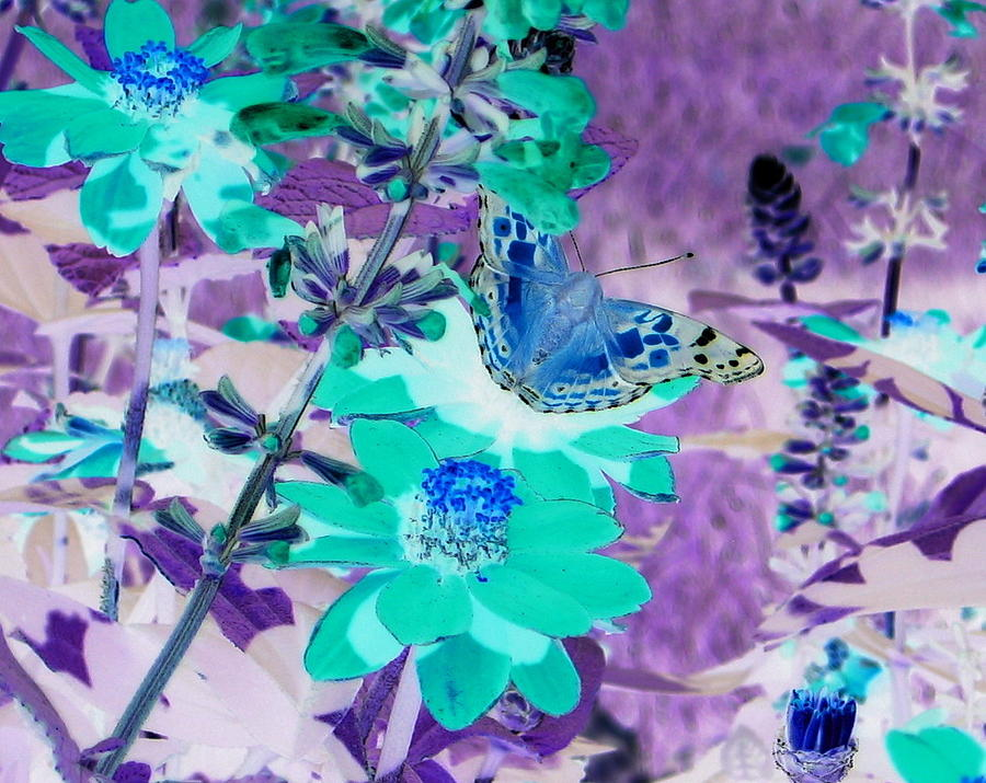 Blue Butterfly And Teal Flowers by Karen J Shine