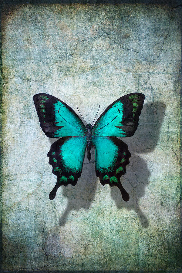 Still Life Photograph - Blue Butterfly Resting by Garry Gay