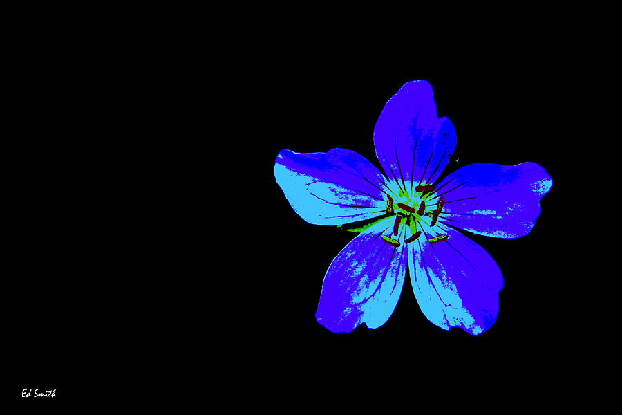Flower Photograph - Blue By You by Ed Smith