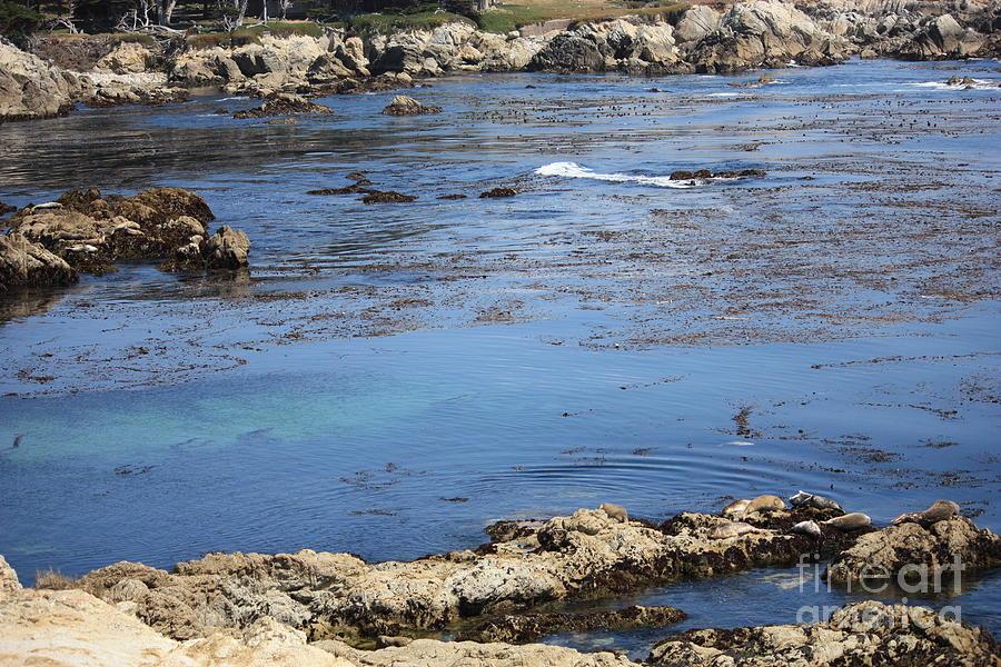 California Photograph - Blue California Bay by Carol Groenen