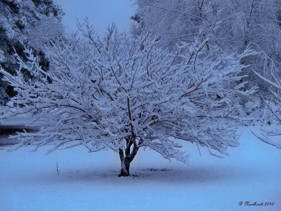 Color Photograph - Blue Christmas by Betty Northcutt