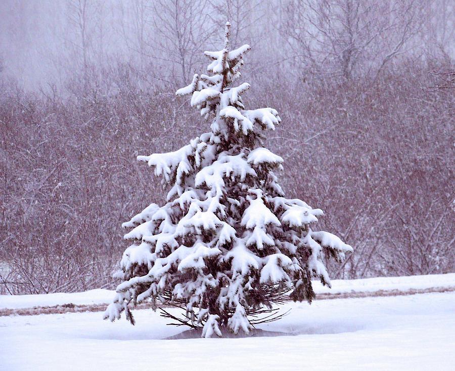 Blue Christmas by Ellen Henneke