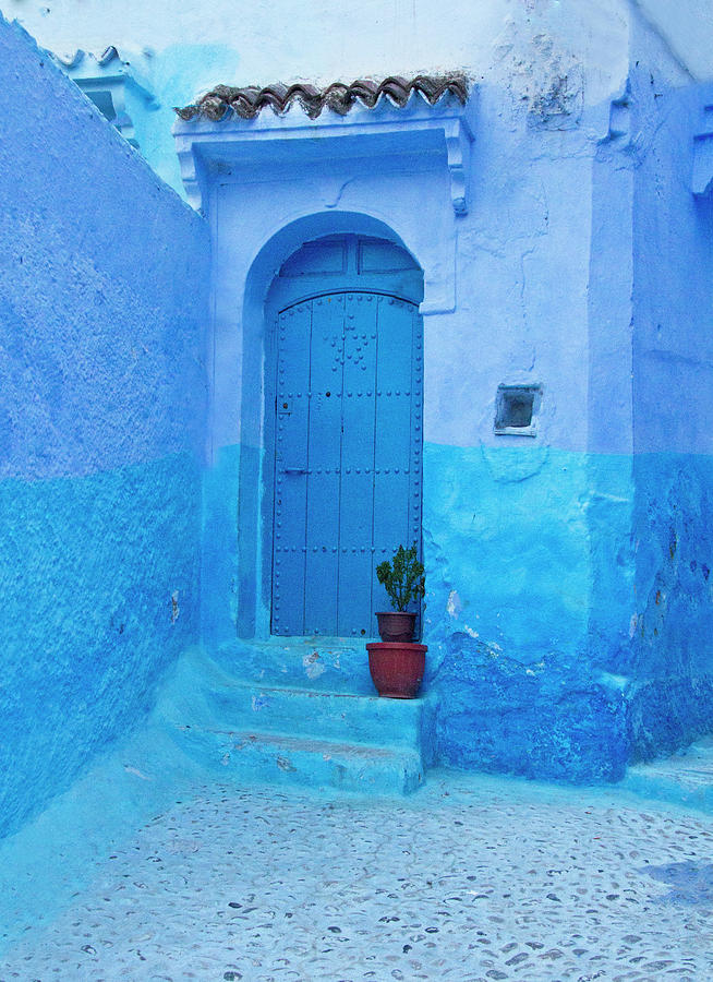 Blue City Door with Plant by Sandra Anderson