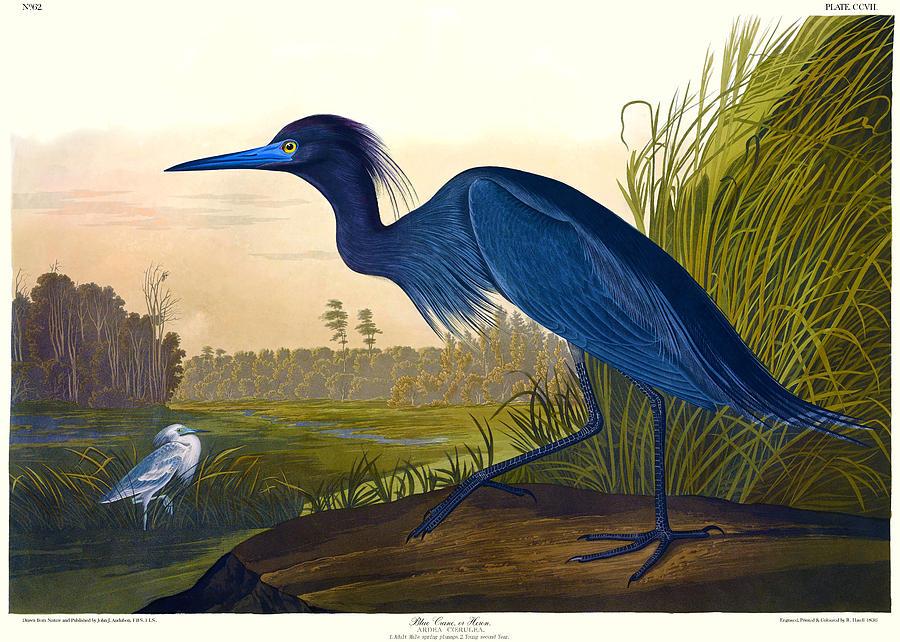 Auburn Canvas Painting