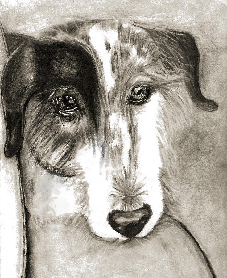 Dog Drawing - Blue by Crystal Suppes