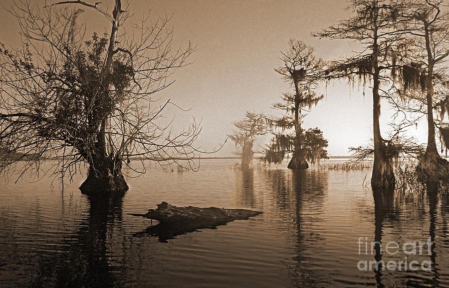 Bald Cypress Trees Photograph - Blue Cypress by Richard Nickson