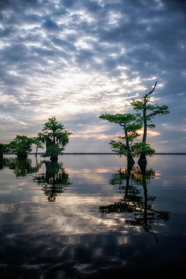 Blue Cypress Sunrise #1 by Ghostwinds Photography