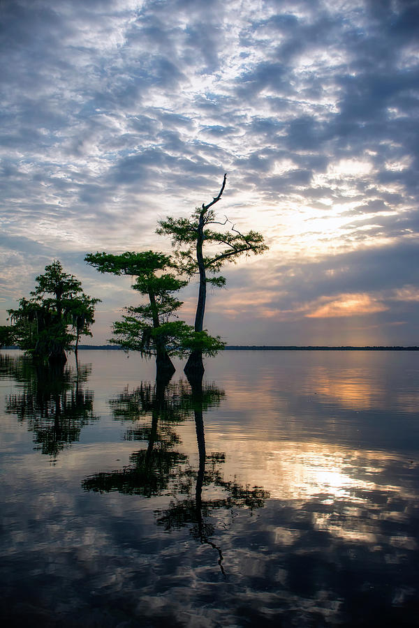 Blue Cypress Sunrise #2 by Ghostwinds Photography