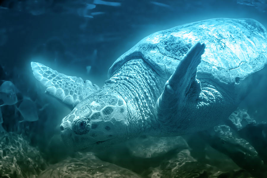 Sea Photograph - Blue Depths Sea Turtle by Betsy Knapp