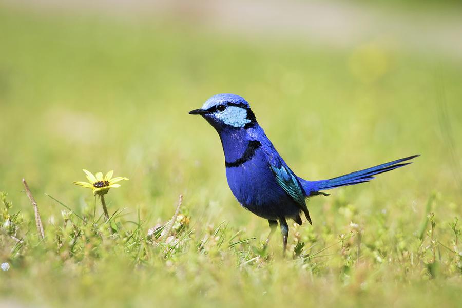 Blue by Diana Andersen