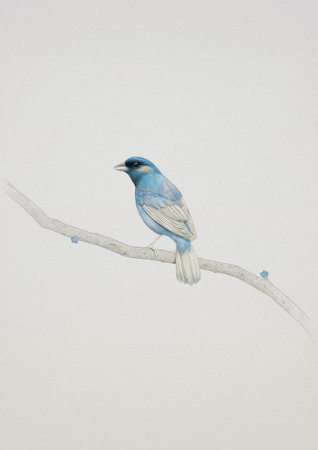 Bird Painting - Blue by Diego Fernandez