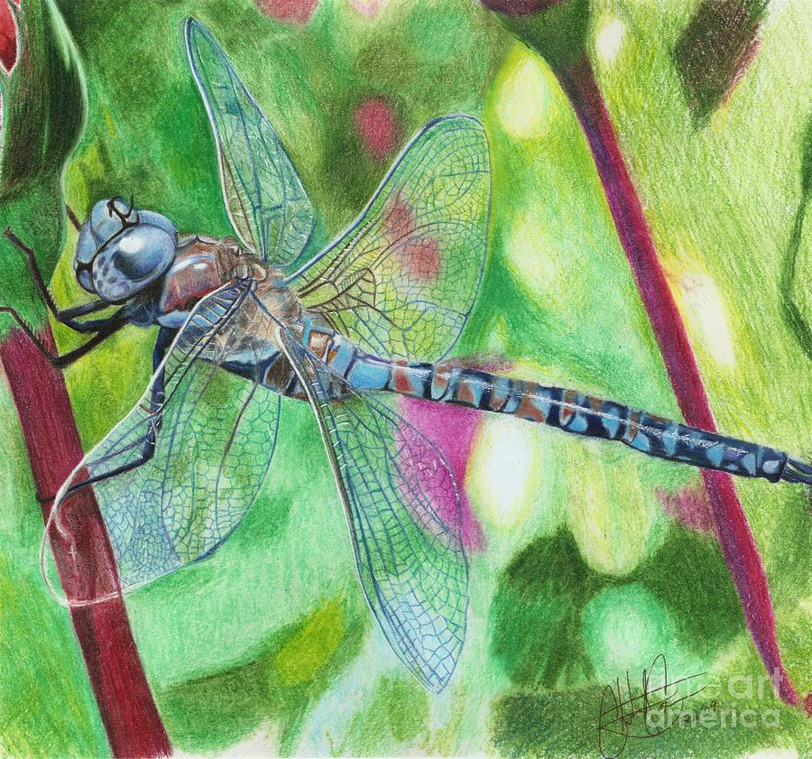 Blue Dragonfly Drawing By Christian Conner