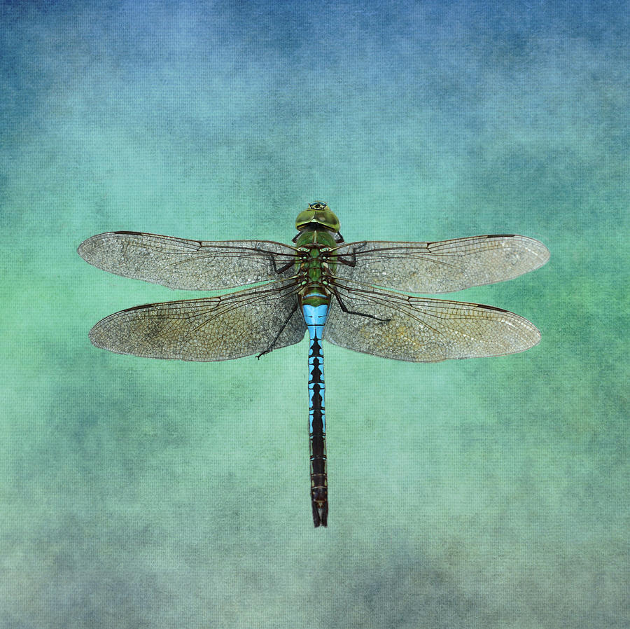 Blue Dragonfly by Inspired Arts